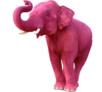 The Pink Elephant Award